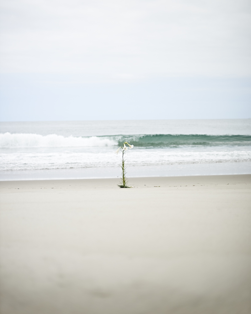 Atsunobu Katagiri Solo Exhibition: Sacrifice in FUKUSHIMA, The Ikebana of Regeneration, Offered to the Future
